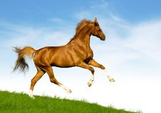 Free Chestnut Horse Gallops On A Green Hill Royalty Free Stock Image - 23592646