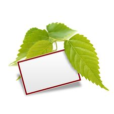 Free Leaf And Notification Space Stock Photography - 23593832