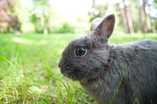 Free Rabbit Stock Photography - 23595192