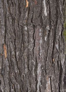 Free Tree Bark Texture Royalty Free Stock Photography - 23595737