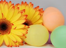 Free Colorful Easter Eggs And Gerber Daisy Stock Photos - 23599433
