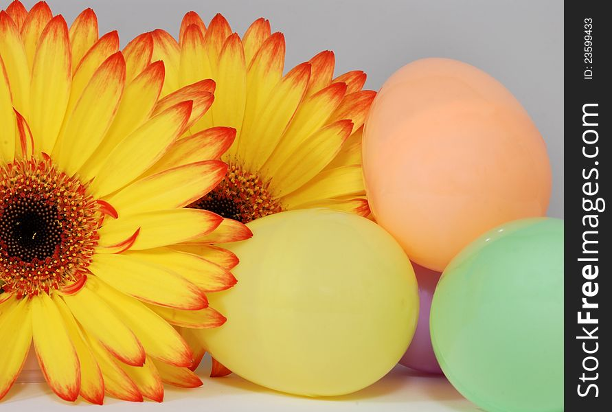 Colorful Easter Eggs and Gerber Daisy