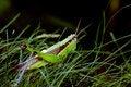 Free Locust Stock Images - 2361484