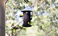 Free Gold Finches On Feeder Stock Photo - 2361850