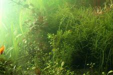 Free Aguarium Landscape Royalty Free Stock Image - 2360256
