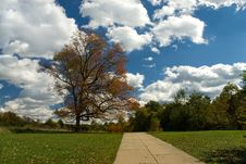 Free Picnic Tree Stock Photo - 2361210