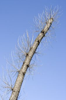 Free Trunk And Branches Of A Tree Stock Image - 2361301