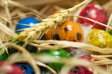 Free Easter Eggs In Nest Royalty Free Stock Image - 2361476