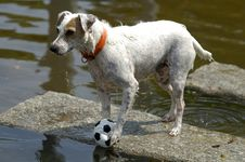 Free The Soccer Dog Royalty Free Stock Image - 2361706