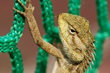 Free Lizard And Net Stock Photo - 2367250