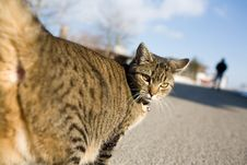 Free Cat, Street, Blue Sky Royalty Free Stock Photos - 2367608