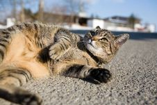 Free Cat, Street Lying Royalty Free Stock Photo - 2367625