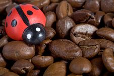 Free Coffeebeans With Ladybug Royalty Free Stock Images - 2367669