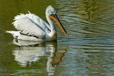 Free Reflection With A Pelican Royalty Free Stock Photography - 2367987