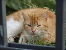 Free Orange Sleeping Cat Stock Photos - 2368373
