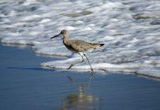 Bird On The Beach Royalty Free Stock Photo