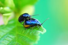 Free Bug Stock Image - 2369181