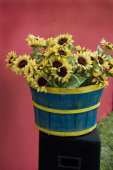 Sunflowers In A Basket Stock Photography