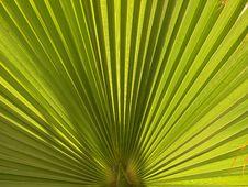 Free Palm Leaf Closeup Stock Images - 2369874