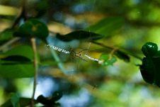 Free Spider Royalty Free Stock Photos - 2369978