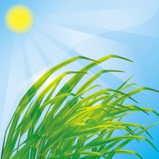 Free Spring Background With Fresh Grass Stock Photography - 23601982