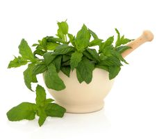 Free Mint Herb Leaves Royalty Free Stock Photos - 23602708