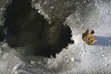 Dead Leaf On The Ice Stock Images