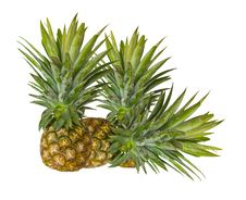 Free Fresh Pineapple Stock Photo - 23608870