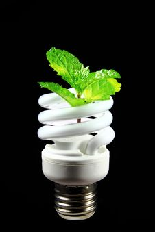 Free Energy Saving Eco Lamp Stock Photography - 23609002