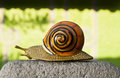 Free Lonely Snail Crawls Along The Cement Path Royalty Free Stock Photos - 23611388