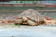 Free Turtle Stock Image - 23610881