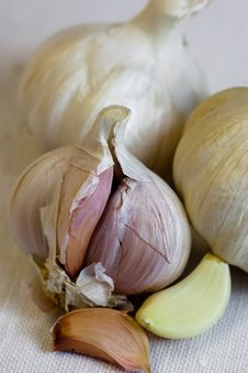 Free Garlic Royalty Free Stock Photos - 23615598