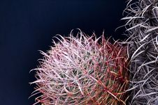 Free Barrel Cactus Close-up Stock Photos - 23617243