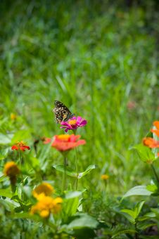 Free Butterfly On  Flower Stock Images - 23619964
