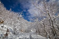 Free Snowy Road Stock Images - 23623574