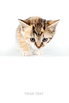 Free Multi-colored Small Kitten Royalty Free Stock Photography - 23626377
