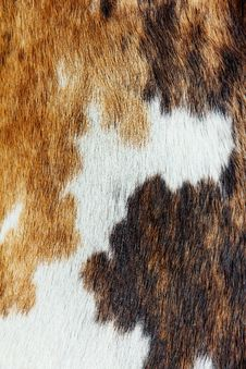 Free Close Up Of Cowhide Background Portrait Stock Images - 23627584