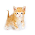 Free Small Red Curious Kitten Royalty Free Stock Image - 23630916
