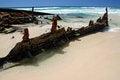 Free Maheno Shipwreck Royalty Free Stock Images - 23631129
