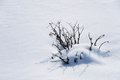 Free Snow Cover And A Snowbound Bush. Stock Photo - 23638790