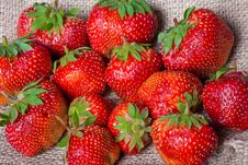 Free Fresh Strawberries Royalty Free Stock Photo - 23630305
