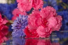 Free First Fresh Spring Flowers Stock Photo - 23630520