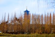 Spruce Forest, And Pagodas Stock Image