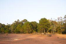 Deer Dry Land Stock Photos