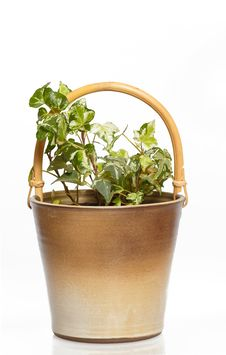 Free Houseplants In Flower Pot Royalty Free Stock Photography - 23637027