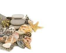 Free Starfish And Cockleshells Lie On A Fishing Net Stock Image - 23638201