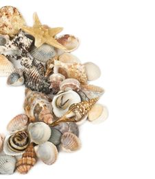Free Background From Marine Cockleshells Stock Photo - 23638210