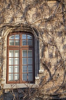 Free Window And Red Ivy Royalty Free Stock Photos - 23638608