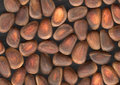 Free Nuts Of Siberian Cedar Pine Royalty Free Stock Photos - 23645568