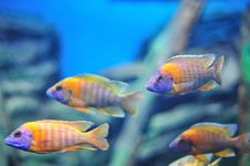 Free Fish In The Aquarium Royalty Free Stock Photos - 23644458